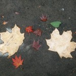 weather leaves 15 test leaves
