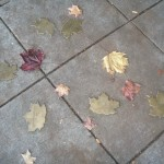 weather leaves group 3 noel house
